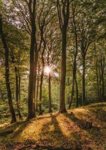 Image d'une forêt avec un soleil qui transperce les branches